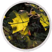 Vine Leaves At Sunset Round Beach Towel