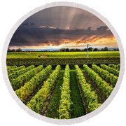 Vineyard At Sunset Round Beach Towel