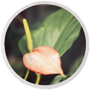 Vintage Anthurium Round Beach Towel