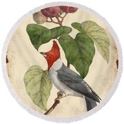 Vintage Bird Study-d Round Beach Towel