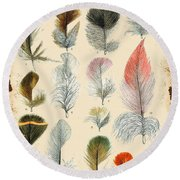 Vintage Feather Study-b Round Beach Towel