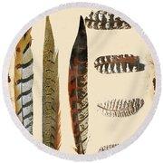 Vintage Feather Study-jp2085 Round Beach Towel