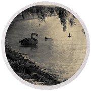 Vintage Views II - Swans And Cygnets Round Beach Towel by Chris Armytage