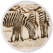 Vintage Zebras Round Beach Towel