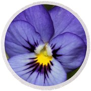 Viola Named Sorbet Blue Heaven Jump-up Round Beach Towel by J McCombie