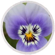 Viola Named Sorbet Marina Baby Face Round Beach Towel