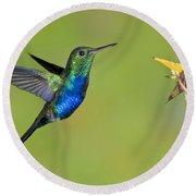 Violet-bellied Hummingbird Round Beach Towel