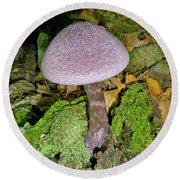 Violet Cortinarious -cortinarious Violaceus Mushroom On Mossy Log Round Beach Towel
