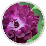 Violet Rose And Buds Round Beach Towel