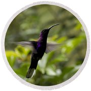 Violet Sabrewing At Cielito Sur Round Beach Towel