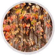 Vitaceae Family Ivy Wall Abstract Round Beach Towel