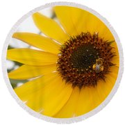 Vivid Sunflower With Bee Fine Art Nature Photography  Round Beach Towel