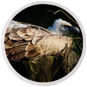 Vulture Resting In The Sun Round Beach Towel