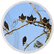 Vulture Tree Full Of Buzzards Round Beach Towel
