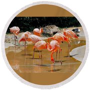 Waikiki Flamingos Round Beach Towel