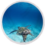 Turtle Soar Round Beach Towel