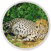 Waiting For Baby Cheetahs Round Beach Towel