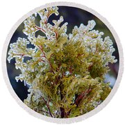 Waiting For Spring - Ice Storm - Closeup Round Beach Towel