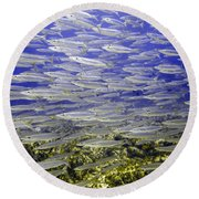 Wall Of Silver Fish Round Beach Towel