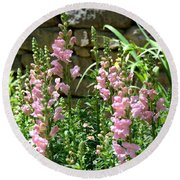 Wall Of Snapdragons Round Beach Towel