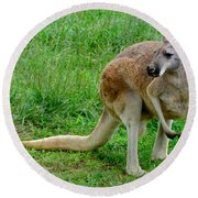 Wallaby Round Beach Towel
