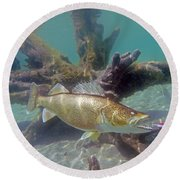 Walleye Pike And Dardevle Round Beach Towel