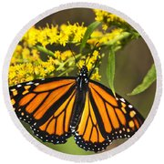 Wandering Migrant Butterfly Round Beach Towel