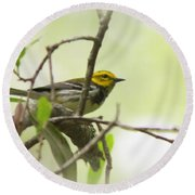 Warbler - Black-throated Green  Round Beach Towel