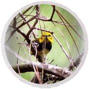 Warbler - Black-throated Green Warbler Round Beach Towel