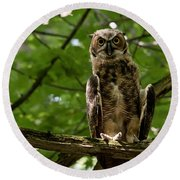 Warm Young Great Horned Owl Round Beach Towel