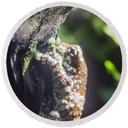 Warty Tree Frog Round Beach Towel