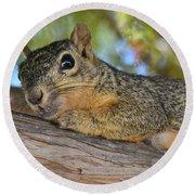 Wary Squirrel Round Beach Towel