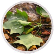 Washed Up Leaves Round Beach Towel