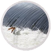 Washington White Pelicans Round Beach Towel
