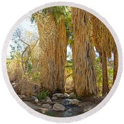 Washingtonian Fan Palms With Large Skirts In Andreas Canyon-ca Round Beach Towel