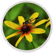 Wasp On A Susan Round Beach Towel