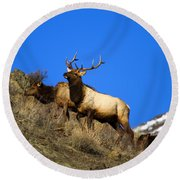 Watchful Bull Round Beach Towel