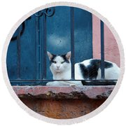 Watchful Cat, Mexico Round Beach Towel