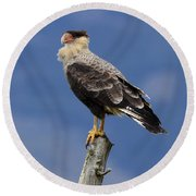Watchful Eyes Crested Southern Caracara Round Beach Towel
