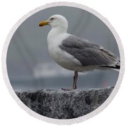 Watchful Seagull Round Beach Towel
