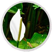 Water Arum In Park Across From Wat Phrathat Doi Suthep In Chiang Mai-thailand. Round Beach Towel