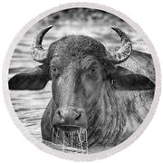 Water Buffalo-black And White Round Beach Towel