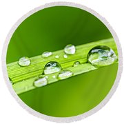 Water Drops On Grass Blade Round Beach Towel by Elena Elisseeva