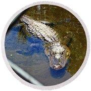 Water Hole Gator Round Beach Towel