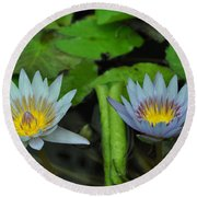 Water Lilies  1 Round Beach Towel