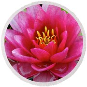 Water Lilly Round Beach Towel by Frozen in Time Fine Art Photography