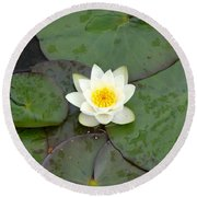 Water Lily - White Round Beach Towel