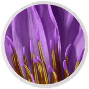 Water Lily-0005 Round Beach Towel