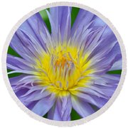 Water Lily 16 Round Beach Towel
