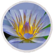 Water Lily 18 Round Beach Towel